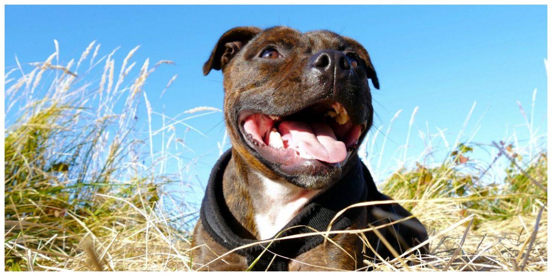 Lijst met bijtgrage honden