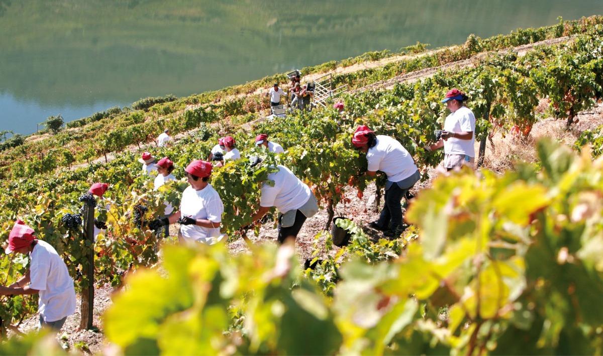 'Quinta': het Portugese landleven