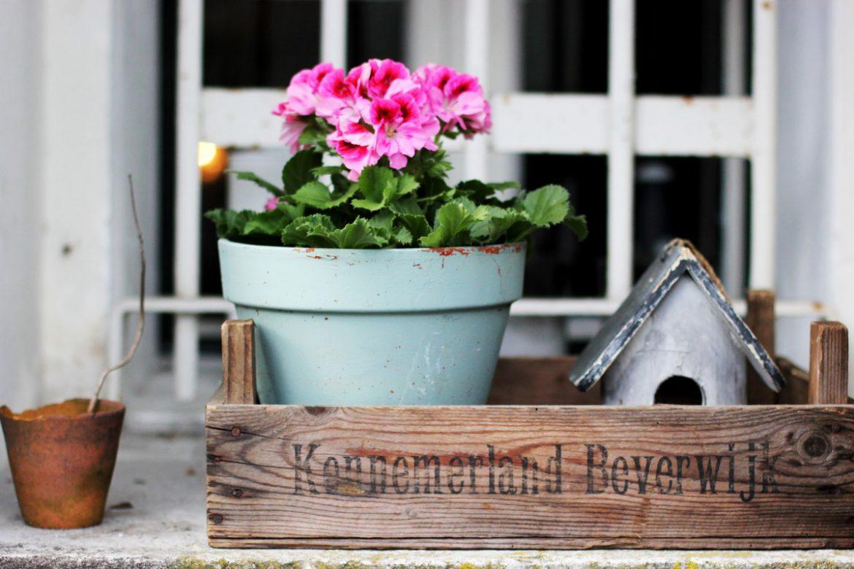 Tips voor sfeer en stijl in je tuin