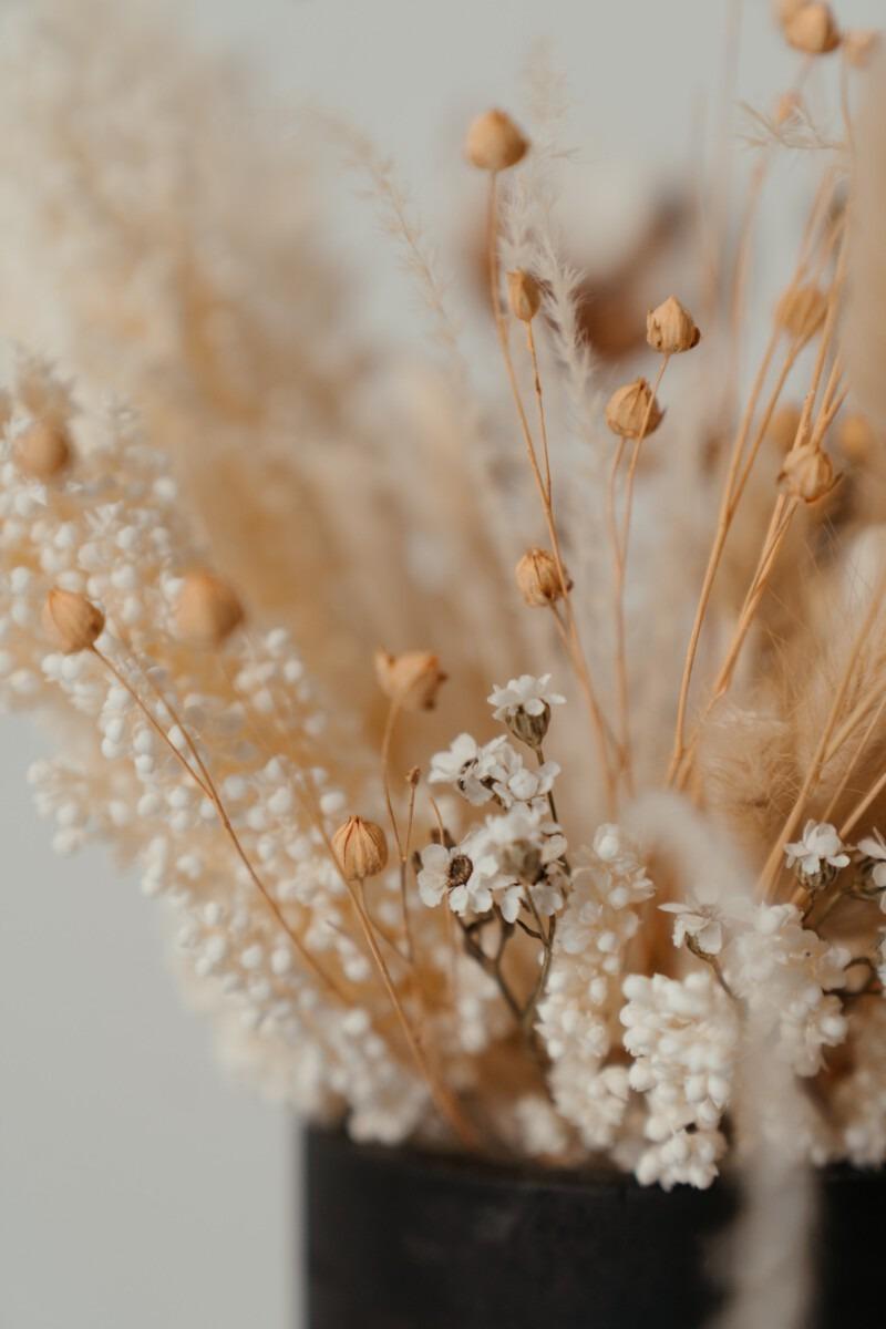 dried flowers droogbloemen